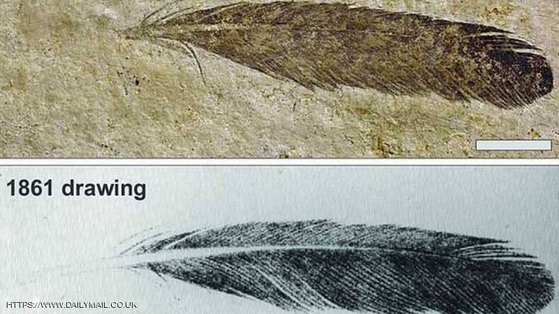 """كشف حقيقة """"ريشة الديناصور"""".. بعد 200 عام من """"الخطأ الفادح"""""""