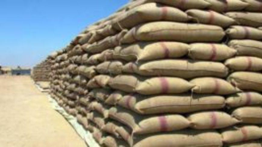 السورية للحبوب تستعد لتسويق كامل محصول القمح