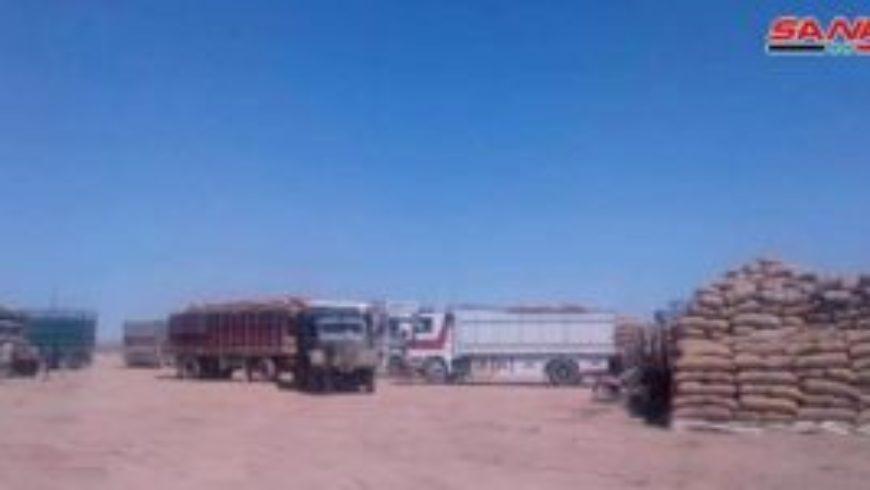 السورية للحبوب في الحسكة: المطاحن جاهزة لاستلام 700 طن يومياً