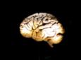 المواد الغذائية الغنية باللوتين ضرورية لصحة الدماغ