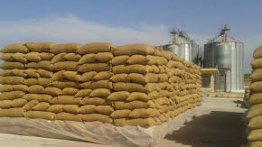السورية للحبوب: أكثر من 18 ألف طن كمية الأقماح المستلمة من الفلاحين