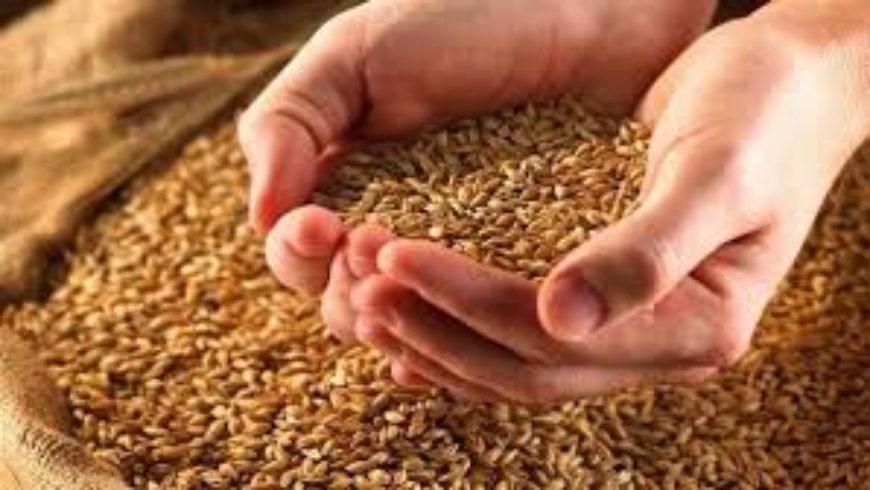 السورية للحبوب تستلم أكثر من 92 ألف طن من القمح وتصرف 5 مليارات ليرة للفلاحين